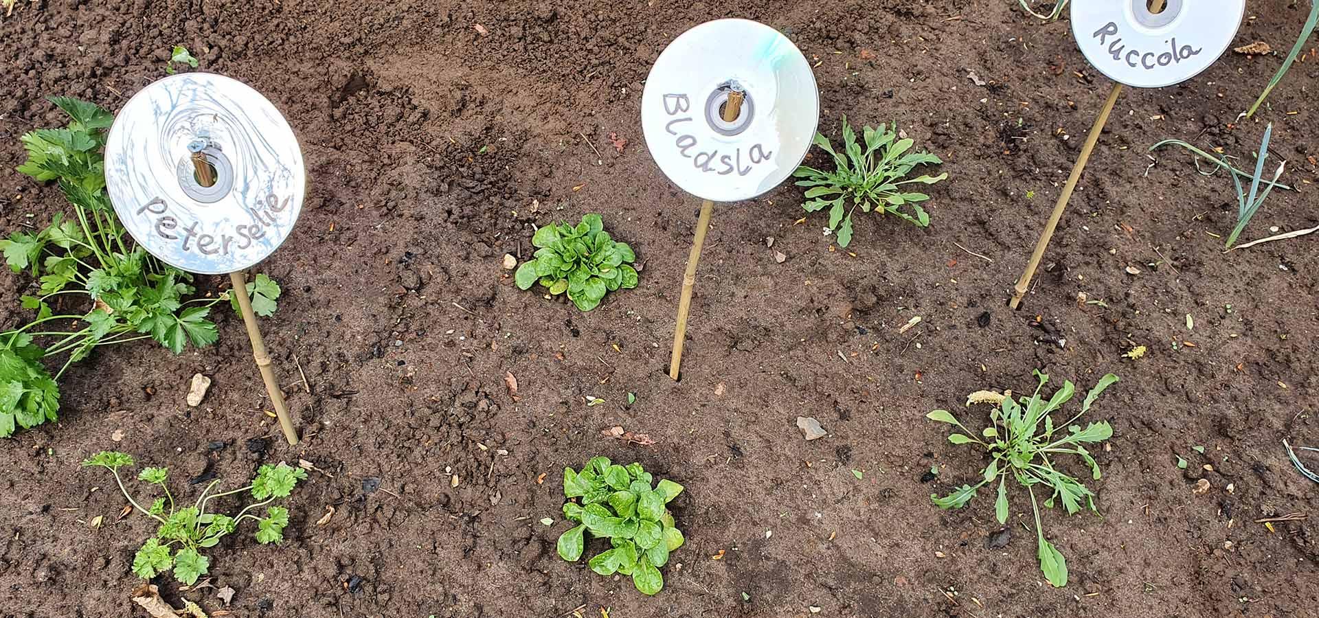 Header afbeelding zelfgemaakt plantenlabels | René Janssen